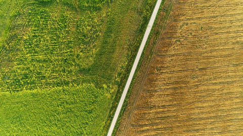 Wheat And Corn Bisected Field Drone Collection 0