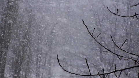 Winter Snowflakes Snow Background Contrast Footage
