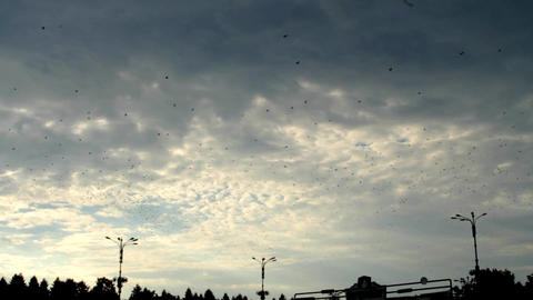 Birds Flying High On A Cloudy Sky, Dusk, Crows Going Back To Nests, Storm Clouds Footage
