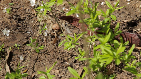 Fresh Green Leaves And Spring Flowers In The Dirt Footage