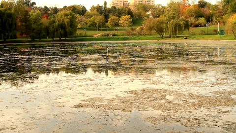 Beautiful Fall Over The Lake, Autumn Colors, Big Park In The City, Tilt Footage