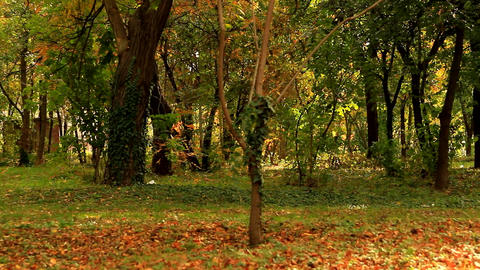 Beautiful Autumn Landscape, Yellowed Leaves, Sunny Afternoon, Fall In The Park Footage