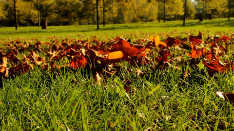 Carper Of Dry Leaves Over The Grass, Fall In The City, Afternoon In The Park Footage