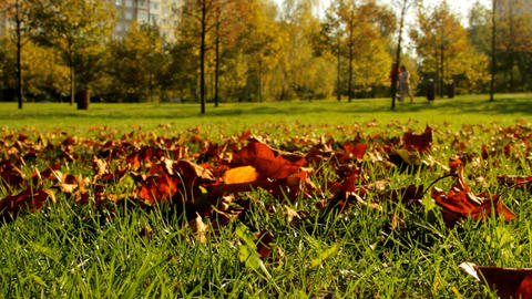 Autumn In Park, Dry Red Leaves Falling, People Walking In Background Footage