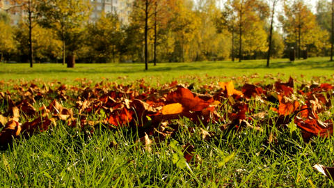 Autumn In Park, Dry Red Leaves Falling, People Walking In Background, Pan Footage