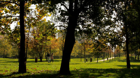Beautiful Autumn Afternoon In A Park, Fall in The City, People Passing By Footage