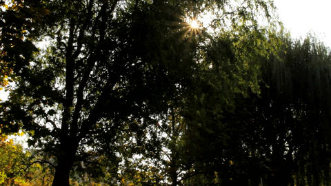 Beautiful Autumn Afternoon In Park, Sun Sparkling Between Trees, People Walking Footage