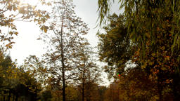 Beautiful Autumn Day, Wind Blowing Between Tree Branches, Autumn Colors Footage