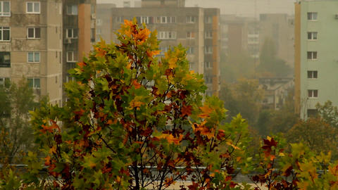 Top Of A Tree On A Rainy And Windy Autumn Day, Late October, City Footage