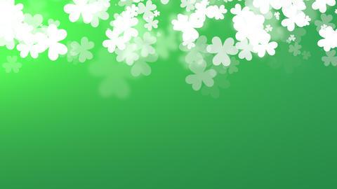 Animation Saint Patricks Day holiday background with motion white shamrocks Animation