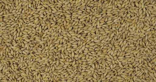 Rotation, background from barley grains. Grocery background. Top view. Copy Live Action
