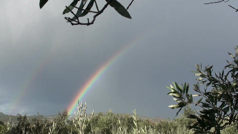 Rainbow and olive trees Live Action