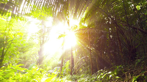 Bright Sunshine Glaring through Jungle Trees on a Nature Trail. Video Footage