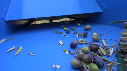 Defoliation of Olives (1) Footage