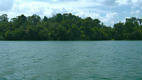 Dense. Tropical Rainforest Foliage at Water's Edge. FullHD video Footage