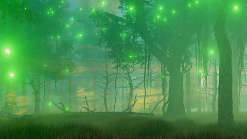 Magical forest at misty night Footage