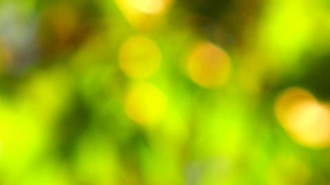 Natural background, blurred tree in golden light with bokeh Footage