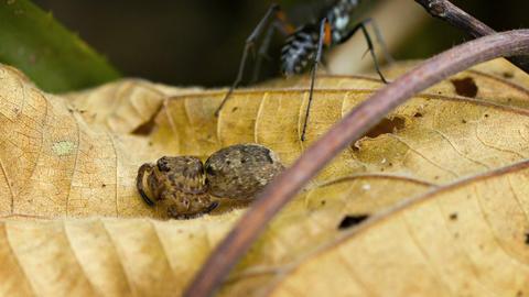 Predatory Wasp Examining her Recent Prey. Video Live Action