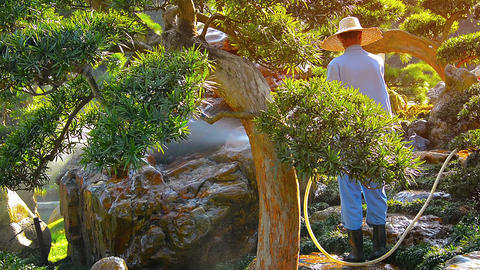 Gardener at work in the ornate Nan Lian Garden. FullHD video Live Action