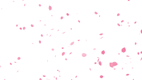 Cherry Blossom Sakura-Cracker4K QTAlpha Animation