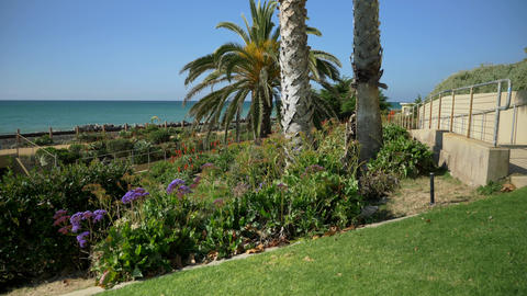 Scenic Beautiful view thru flowers green plants agave aloe vera San Clemente Live Action