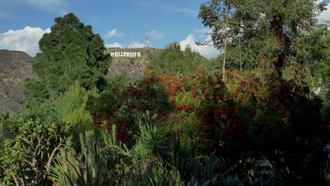 Famous landmark Hollywood Sign in Los Angeles, California thru green plants Live Action