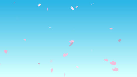 Cherry blossom petals flutter in blue sky Animation