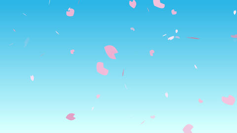 Cherry blossom petals flutter in blue sky After Effects Template