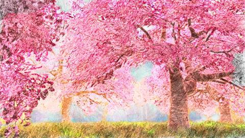 4K Blossoming Trees Spring Garden Bloom Handdraw Art Animation