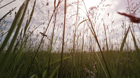 Low Angle Perspective of Passage through High Grass and Wildflowers Footage