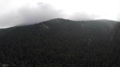 Dark Forest Footage