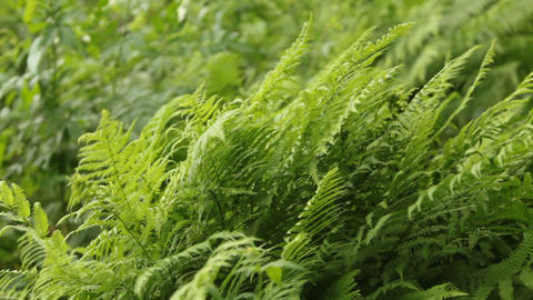 lush greenery green fern Live Action