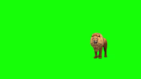 415 3D animated lion looks around and other actions Animation