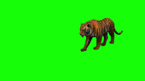 416 3d animated tiger eats walks roars and other acctions Animation