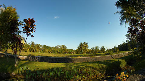 Kite Flying in the Tropical Blue Sky in Southeast Asia. Video 4k Footage