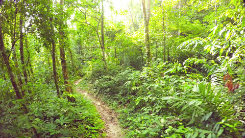 Leisurely Walk along a Tropical Rainforest Nature Trail. Video 4k Footage