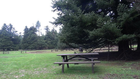 Benches in the Woods Footage