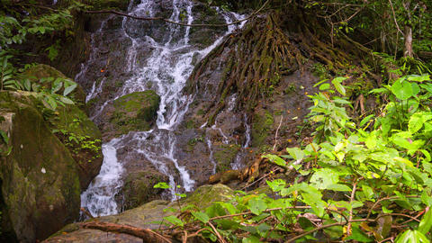 Water Streaming down a Rocky Precipice. and between Tree Roots. with Sound Footage
