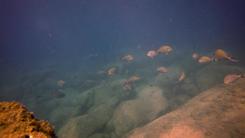 Tourist Snorkeling in the Rocky Shallows with Fish. Video 3840x2160 Footage