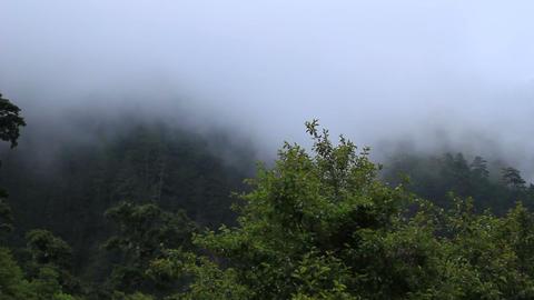 Mountain mist 01 Footage