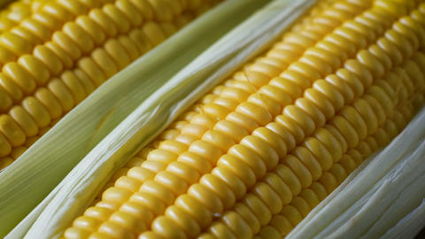 Close up shot fresh sweet corn, with natural sunlight, high vitamin fruit, and vegetable Live Action
