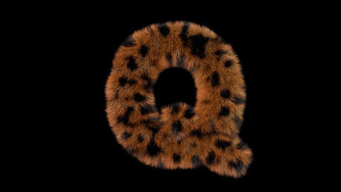 3D animated furry hairy zoo leopard text typeface with alpha channel Q Animation