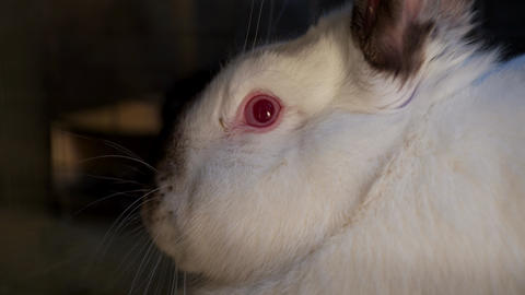 White cuddly rabbit with red eye, close up Live Action