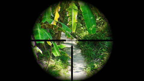 Jungle Nature Trail through the Crosshairs. UltraHD video Footage
