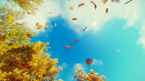 Motion through falling autumn leaves to blue sunny sky Footage