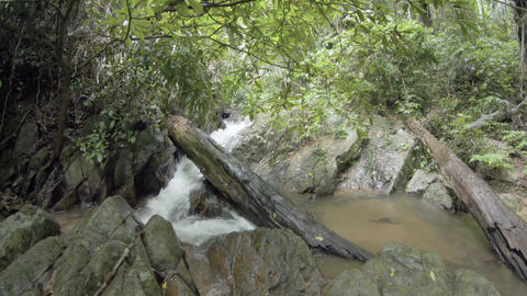 Deadfall log from trees in tropical rainforest wilderness spans small waterfall Live Action
