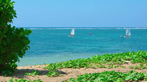 Pair of Matching Sailboats Converge off a Tropical Beach Paradise Live Action