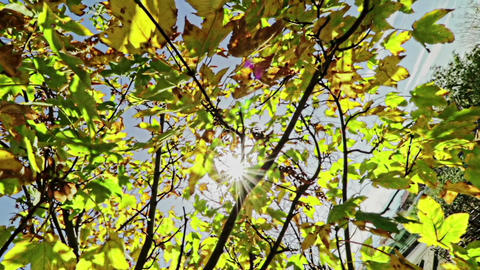 forest trees silhouette and green spring summer leaves at daylight sky with sun flare rays flying Live Action