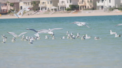 Flying flock of seagulls over the sea Live Action