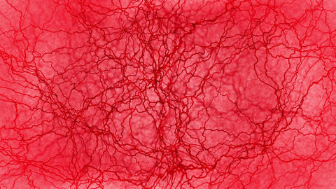 3D loop animation of human blood vessel. Red capillaries. Eye blood on red background. Anatomical Animation